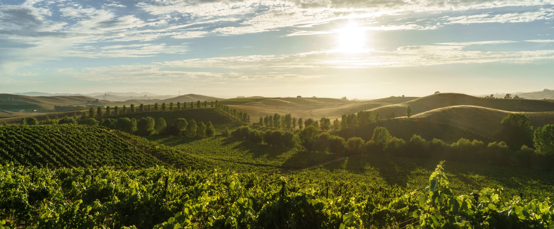 A view of green rolling hills and vineyards in Sonoma County, California.