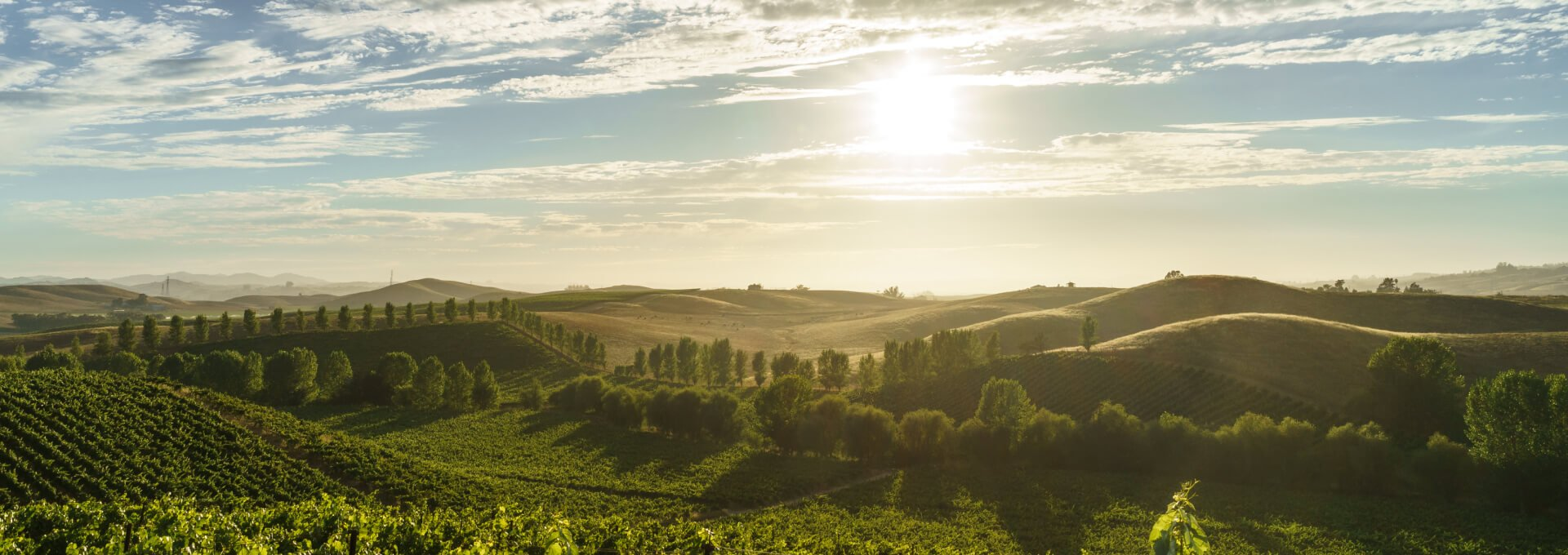 The rolling hills and green vineyards of California's wine country seen in the late afternoon sun.